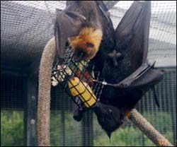 Bats at Lubee